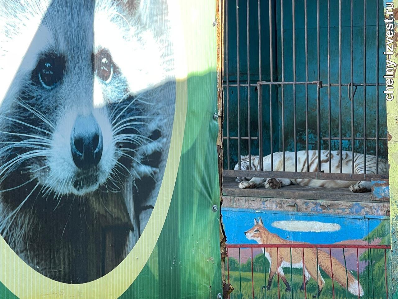 передвижной зоопарк в челнах мешает жителям