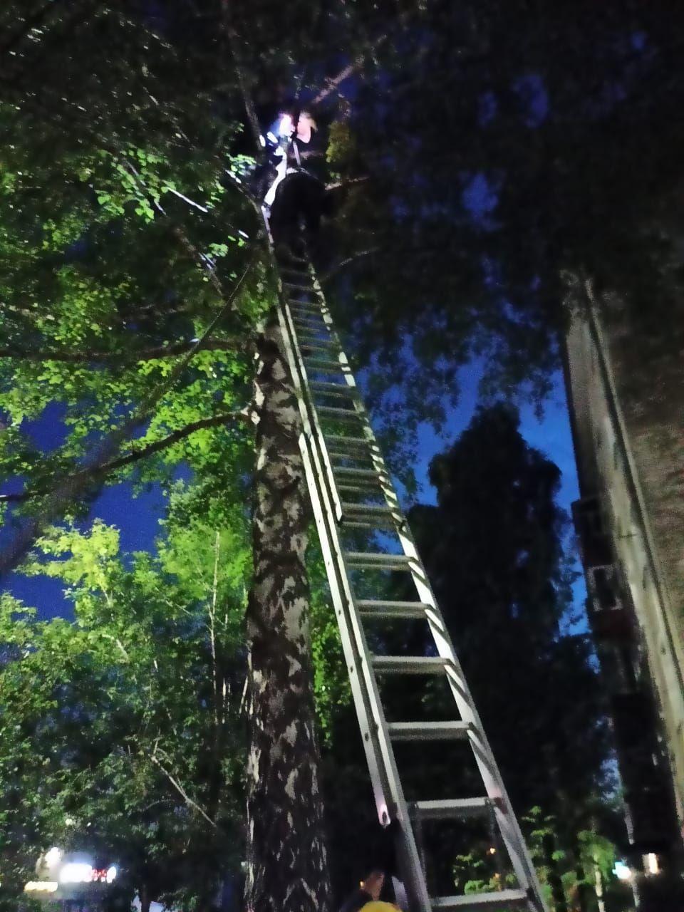 В Татарстане спасатели сняли с высокого дерева мужчину