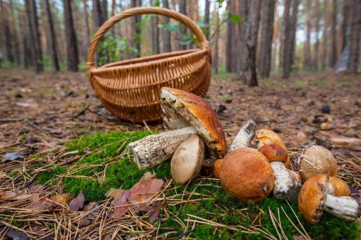 Биолог объяснил, можно ли есть червивые грибы