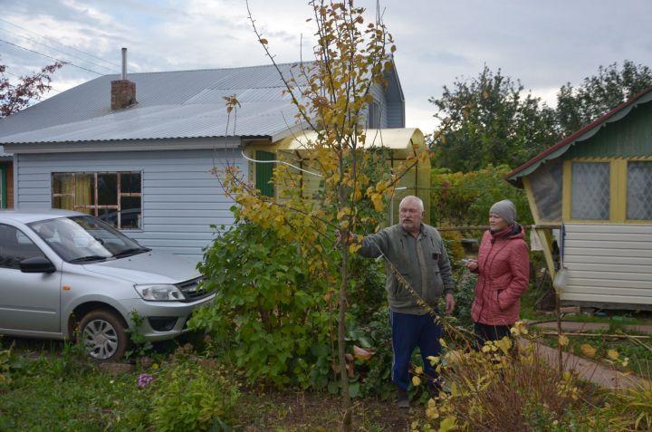 Осенние работы в огороде после засушливого лета