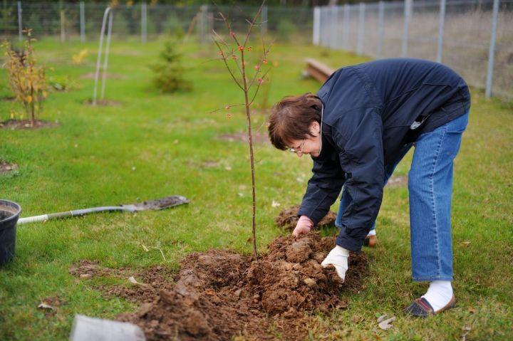 Какие плодовые деревья лучше не сажать осенью